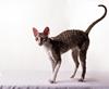 Vign_Exposition-feline-4564